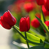 elis_27: (весна)
