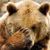 alpinebear: (facepaw)