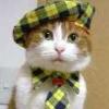 fancycwabs: (CAT TOWN)