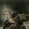 alverena: (dragon)