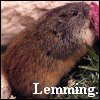 dizmo: (other - lemming)