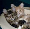 catalenamara: (Kitties Sink)