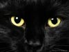 catalenamara: (Black Cat)