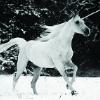 starlightsangel: (b&w unicorn)