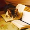 starlightsangel: (Kitteh - Devour the Books)