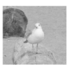 agoodwinsmith: (Little Seagull)