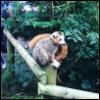 gerric: (Lemur)
