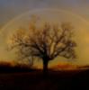 smile_n_cuddle: (Tree and Rainbow)