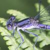 ljplicease: (Dragonfly)