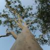 ljplicease: (my tree)