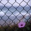 ljplicease: (flower fence)