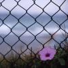 ljplicease: (flower fence)