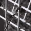 ljplicease: (dragonfly2)