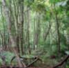ljplicease: (woods)