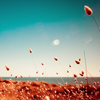 100indecisions: fields of gold (field)
