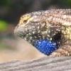 divisionsandprecisions: (lizard)