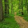 alivemagdolene: (Path)