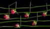 jazz2b: (Default)