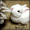 liekinloimu: (bunny)
