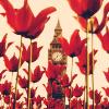 terriem: (Red London)