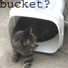amredthelector: (ozzy bucket)