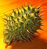 fivemack: (spiky)