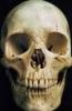 nexussix: (skull)