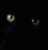 clhollandwriter: (eyes)