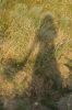 heathberry: (тень на холмах)