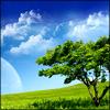 evel_lin: (tree moon)