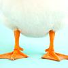 evel_lin: (Geese)