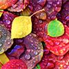 evel_lin: (Autumn)