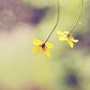 daynar_sagoka: (цветы)