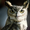 hd_owlpost: (owl)