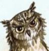 hd_owlpost: (owl 1)