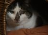 gurthaew: (Cat)