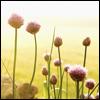 hestergray: (sunny flowers)