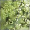 hestergray: (leaves)
