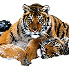thornsilver: (tigers)