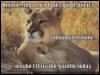 aphrabehn: (Lions)
