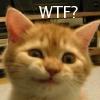 azdesertrose: (WTF? (kitten))