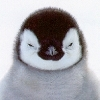 orange_smaug: (Baby Penguin)