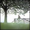 lasairfhiona: (tree/fence)