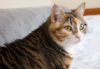 pameladean: Photo of torbie cat from the side, looking winsome (Cassie)