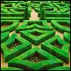 tshuma: (maze)