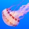 tshuma: (jelly)