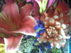 tamaravining: (Big Flowers)