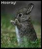 redfishie: (Bunny Yay!)