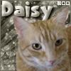 jazzycola: (daisyboo)