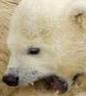 arguchik: (polar)